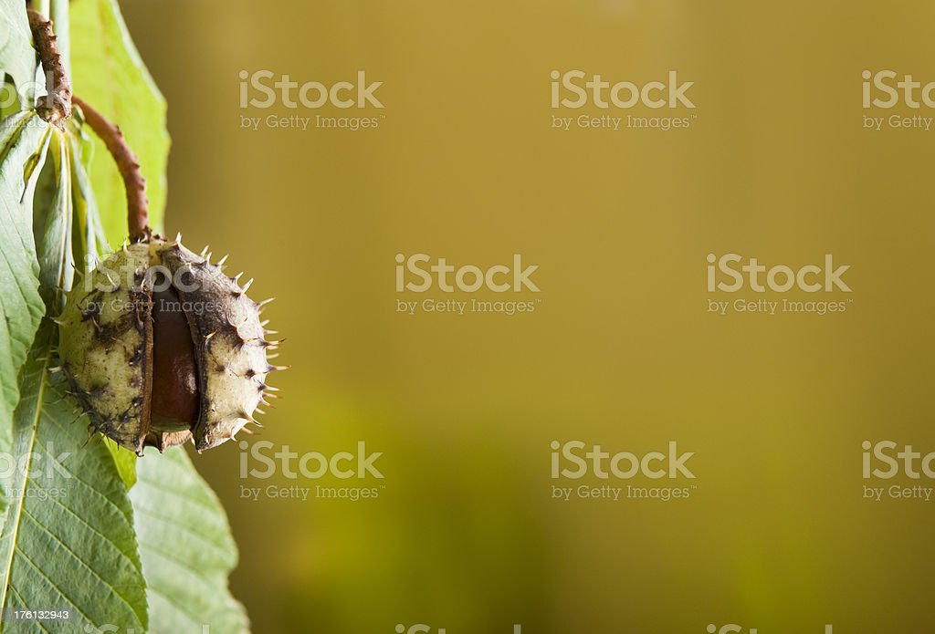 Golden autumn royalty-free stock photo