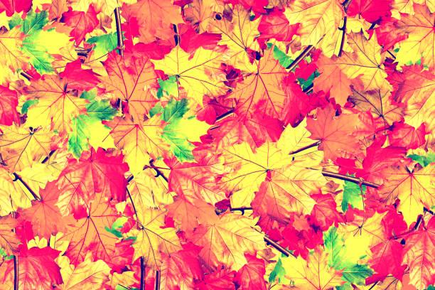 L'automne. - Photo