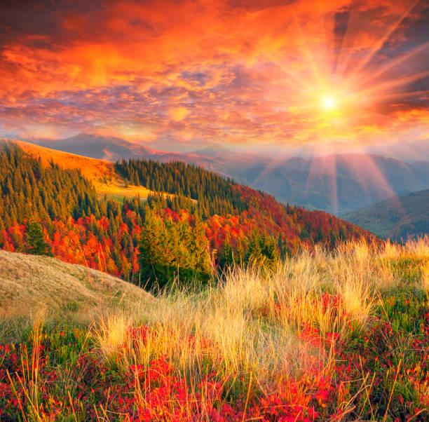 골든 추절 - 카르파티아 산맥 뉴스 사진 이미지