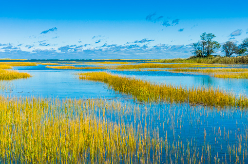 Autumn weather turns green reeds in a Cape Cod salt marsh to a rich golden color which contrasts with the blue waters of the high tide.