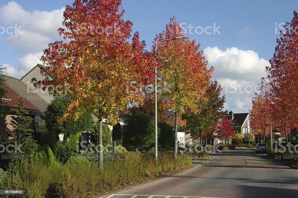 Golden autumn scene royalty-free stock photo