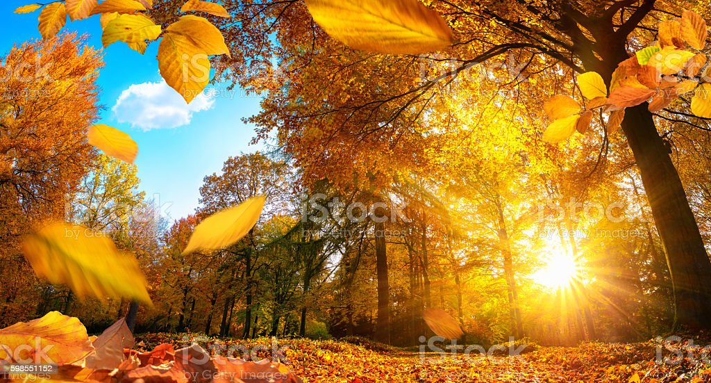Golden autumn scene with falling leaves stock photo