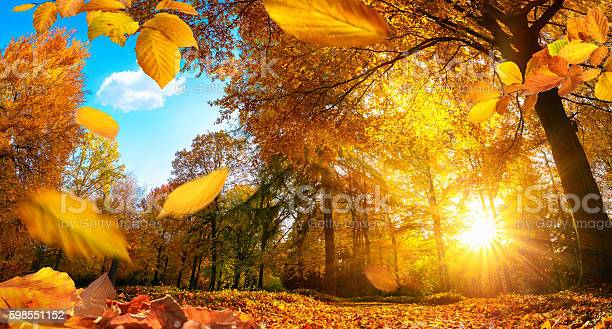 Photo of Golden autumn scene with falling leaves
