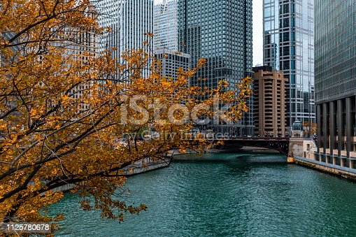 A tree with golden colored leaves during autumn over the Chicago River