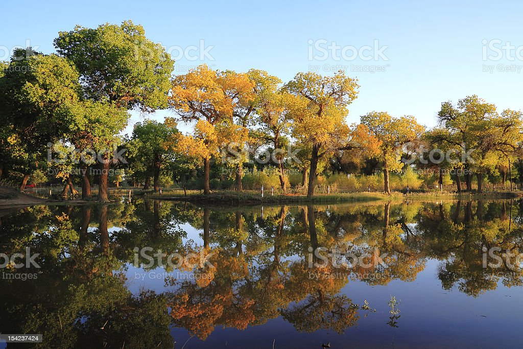 Golden autumn trees in the river side royalty-free stock photo