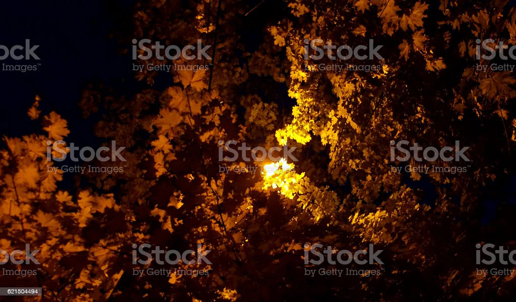 Golden autumnal beam foto stock royalty-free