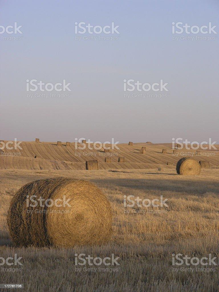 Golden Bale stock photo