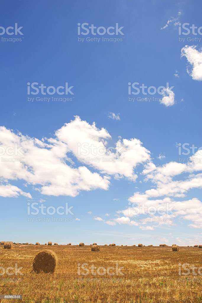 Golden bales of hay on the lands royalty free stockfoto