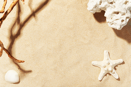 Golden beach sand with seashell, starfish and sea stone. Shadow of tree. Copy space for text. Summer decorations. Seasonal vacation and travelling concept.