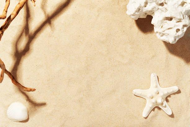 złoty piasek plażowy z muszlą, rozgwiazdą i kamieniem morskim. cień drzewa. kopiuj miejsce na tekst. dekoracje letnie. sezonowe wakacje i koncepcja podróży - piasek zdjęcia i obrazy z banku zdjęć