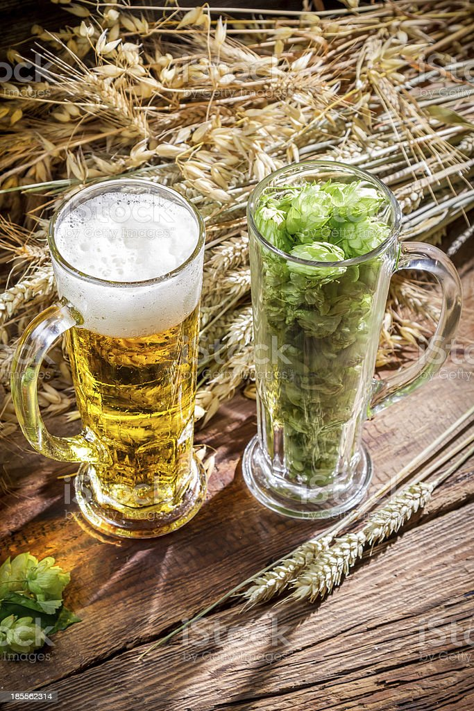Golden beer with a large foam royalty-free stock photo