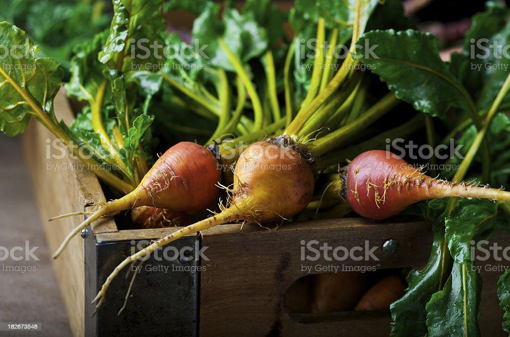 Golden Beets stock photo
