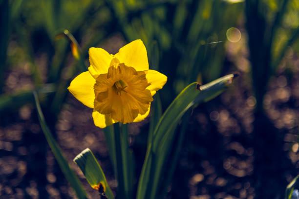 Golden Bloom stock photo