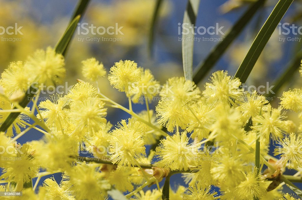 Golden bloom royalty-free stock photo