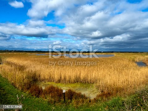 Wide-angle image taken from a small ridge and taking in the low-land bowl of marshes of the Keyhaven Nature Reserve. Golden Rushes and reeds lead from foreground to horizon, interspersed with steely-coloured water, under a dramatic and clouding over sky.