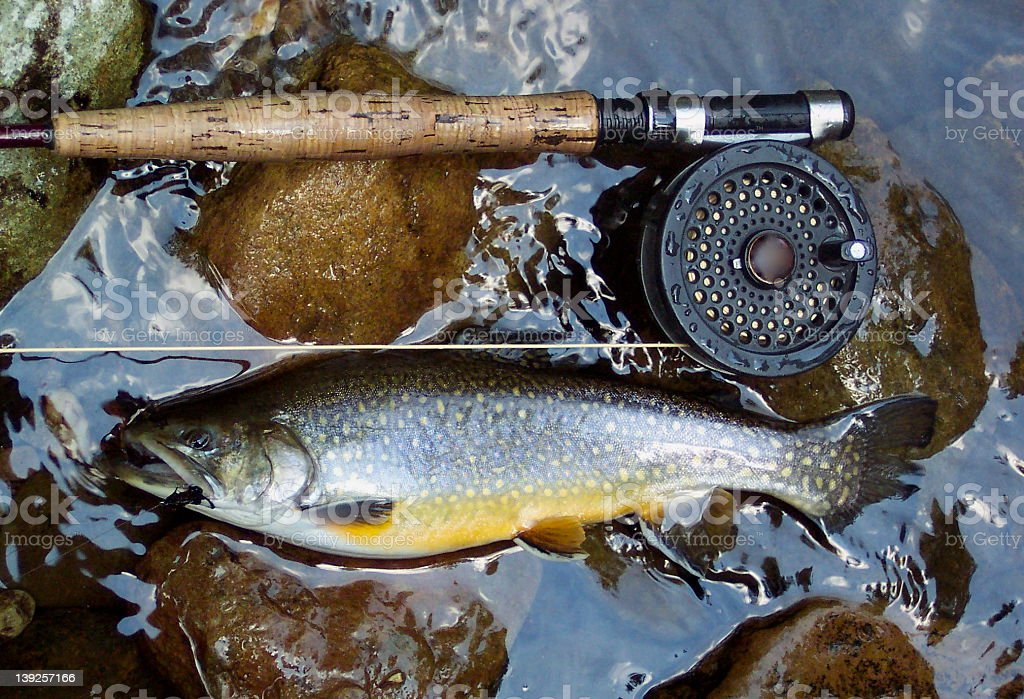 Golden Brook Trout stock photo