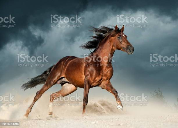 Golden brown andalusian horse runs free in the desert picture id881496084?b=1&k=6&m=881496084&s=612x612&h=uxhf518unhqn2ej ylncdit8vjbbi 87jb3q2nxfnlc=