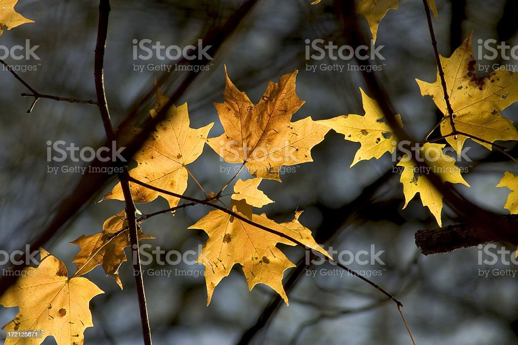 golden brown royalty-free stock photo
