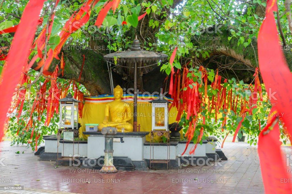 Estatua Dorada De Buda Bajo El Rbol De Bodhi Fotografa De Stock