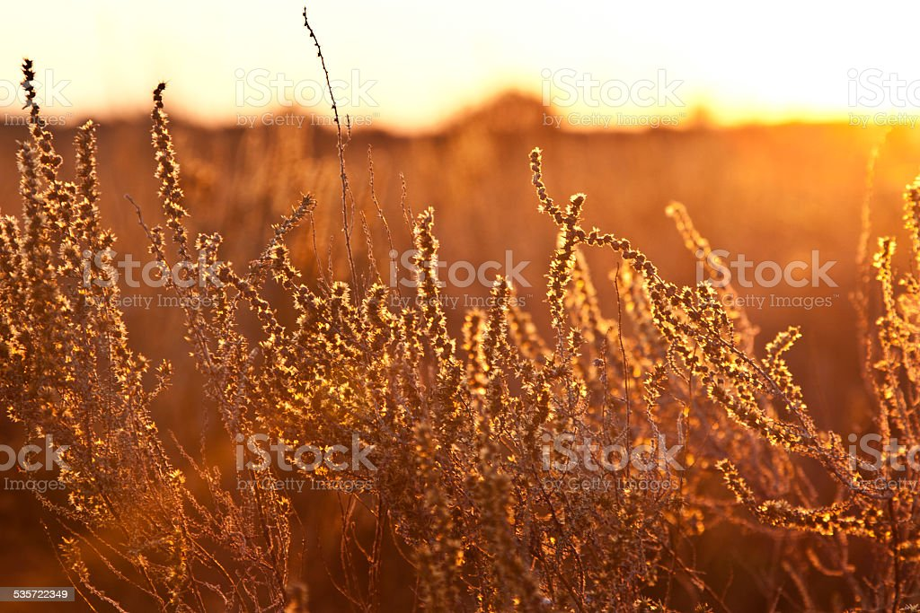 Golden Bush stock photo