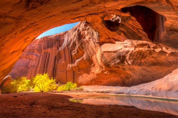 Golden Cathedral The red sandstone domed ceiling of Golden Cathedral in Neon Canyon has two arch potholes, with Yellow Cottonwood trees in Autumn, in Grand Staircase Escalante National Monument, Utah cottonwood tree stock pictures, royalty-free photos & images
