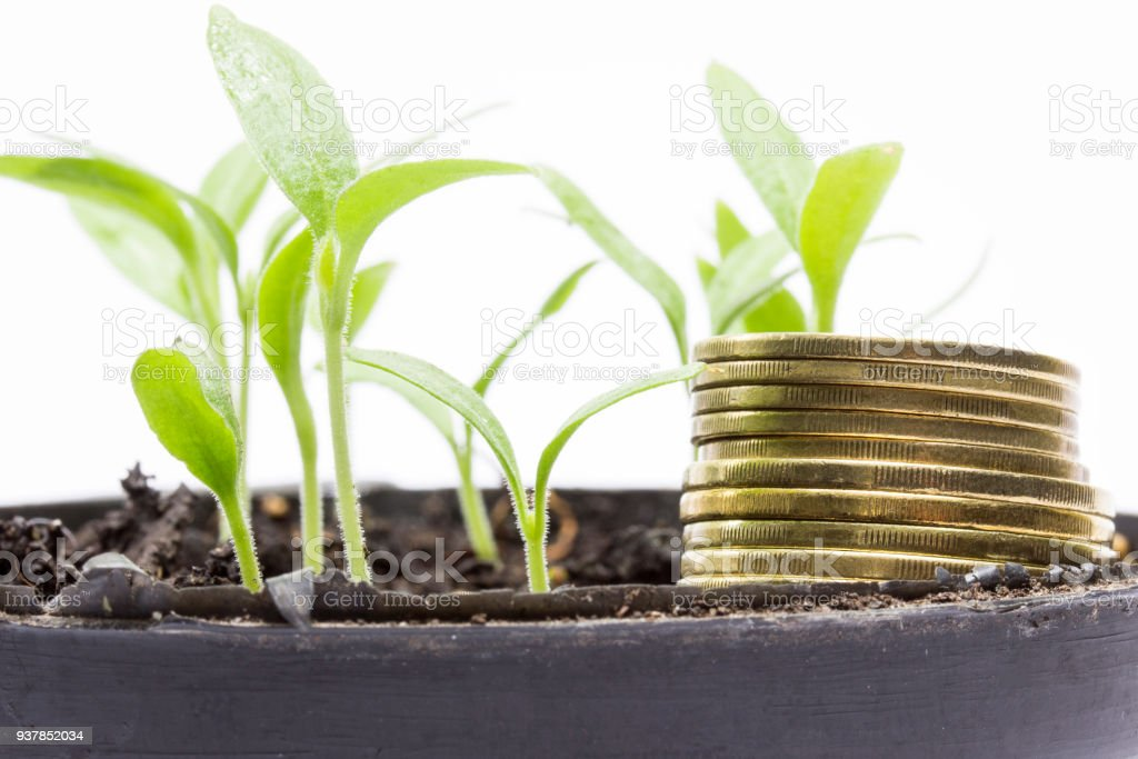 golden coins and bright green aubergine sprouts closeup stock photo