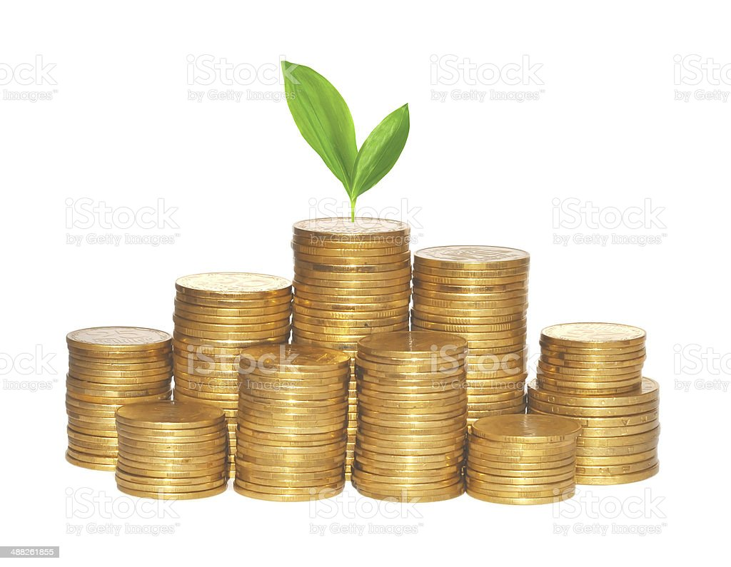 golden coins and green plant isolated on white stock photo