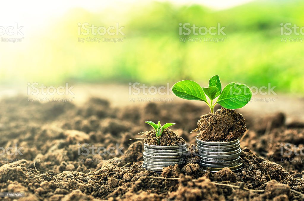 Golden coins in soil with young plant. Money growth concept. stock photo