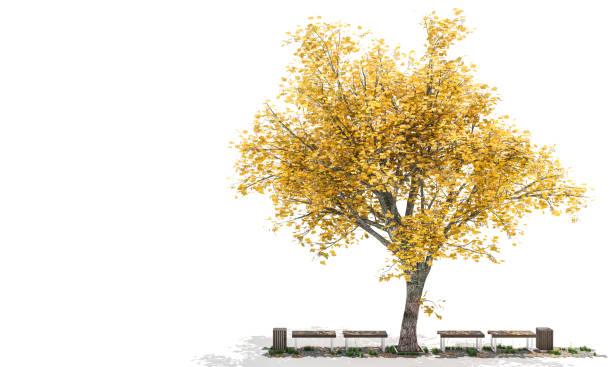 Goldenes farbigen Laub Baum mit Bänke auf jeder Seite – Foto