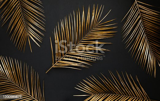 istock Golden date palm leaves on black background 1200585677