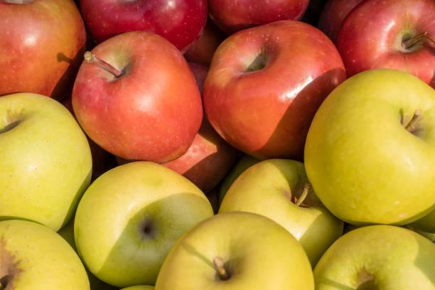golden delicious et les pommes gala - golden photos et images de collection