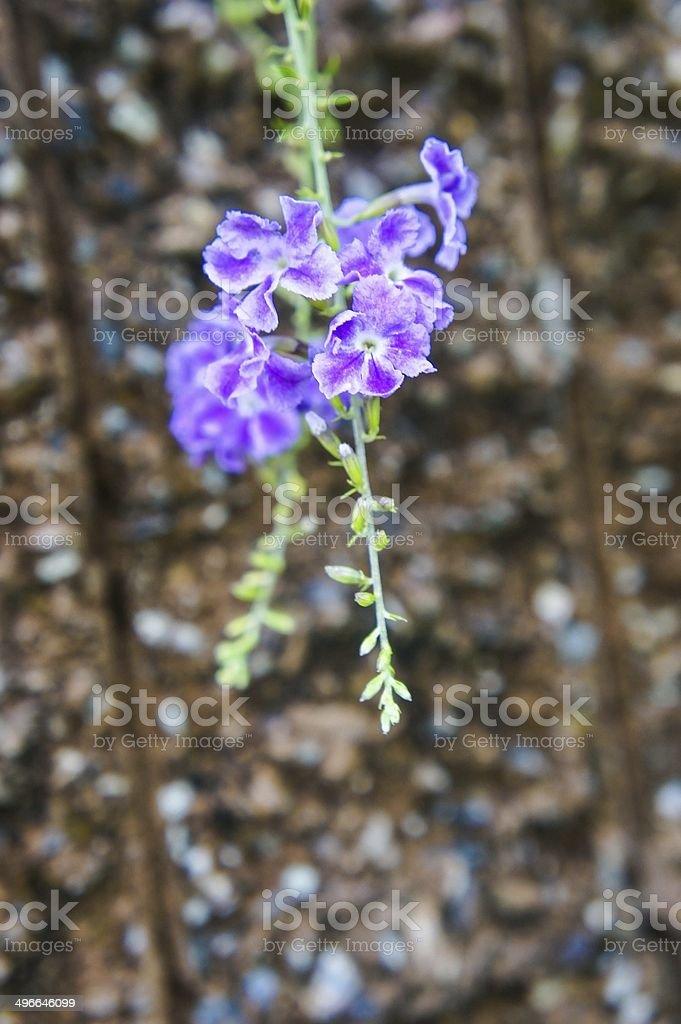 golden dewdrop flowers stock photo
