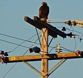 Lower Klamath National Wildlife Refuge.\nNorthern California's Klamath Basin.\nAdult Golden Eagle At Sunrise.
