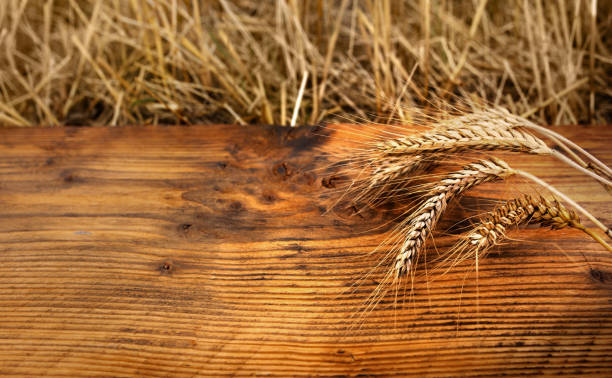 Golden ears of wheat on old wood_ stock photo