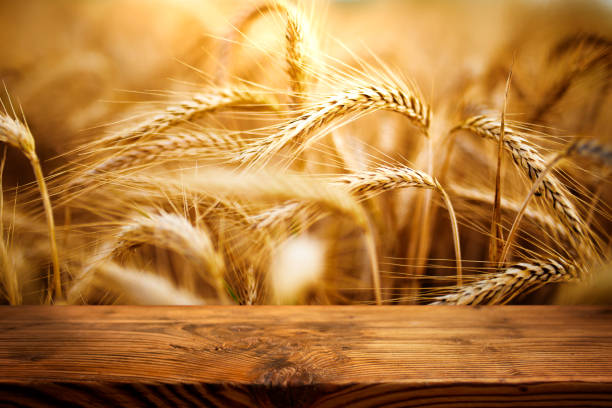 Golden ears of wheat with wooden table stock photo