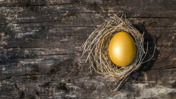 A golden egg opportunity concept of wealth and a chance to be rich A golden egg opportunity concept of wealth and a chance to be rich nest egg stock pictures, royalty-free photos & images