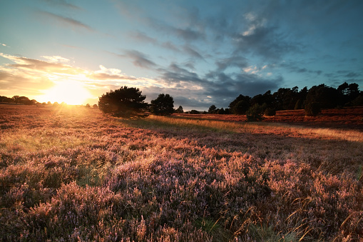 golden evening sunlight over flowering summer meadow