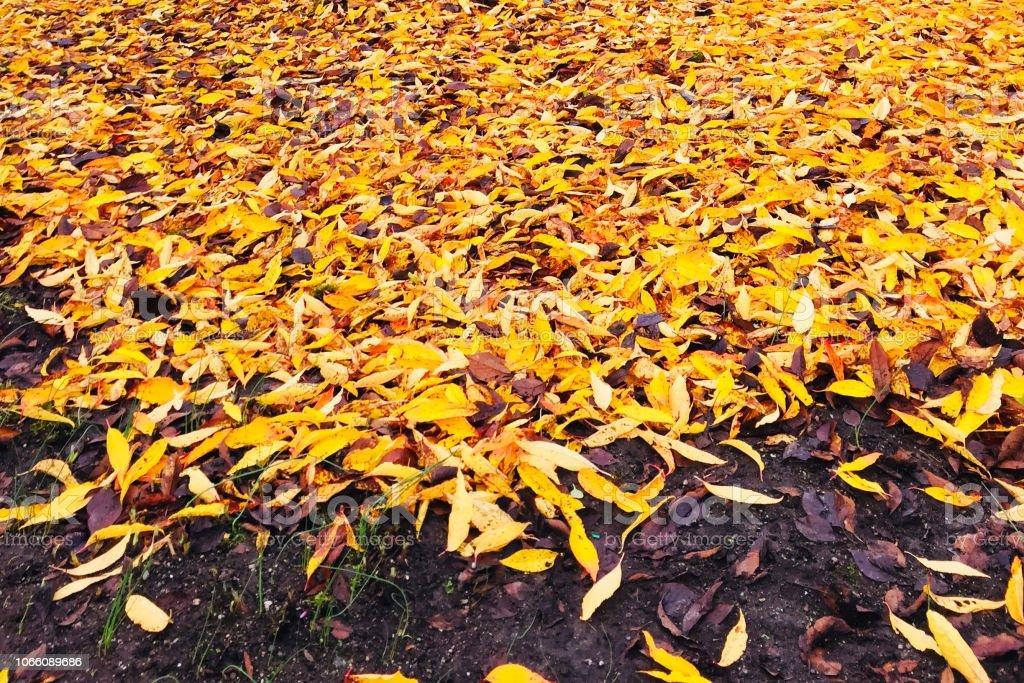 Goldener Herbstlaub auf dem Boden – Foto