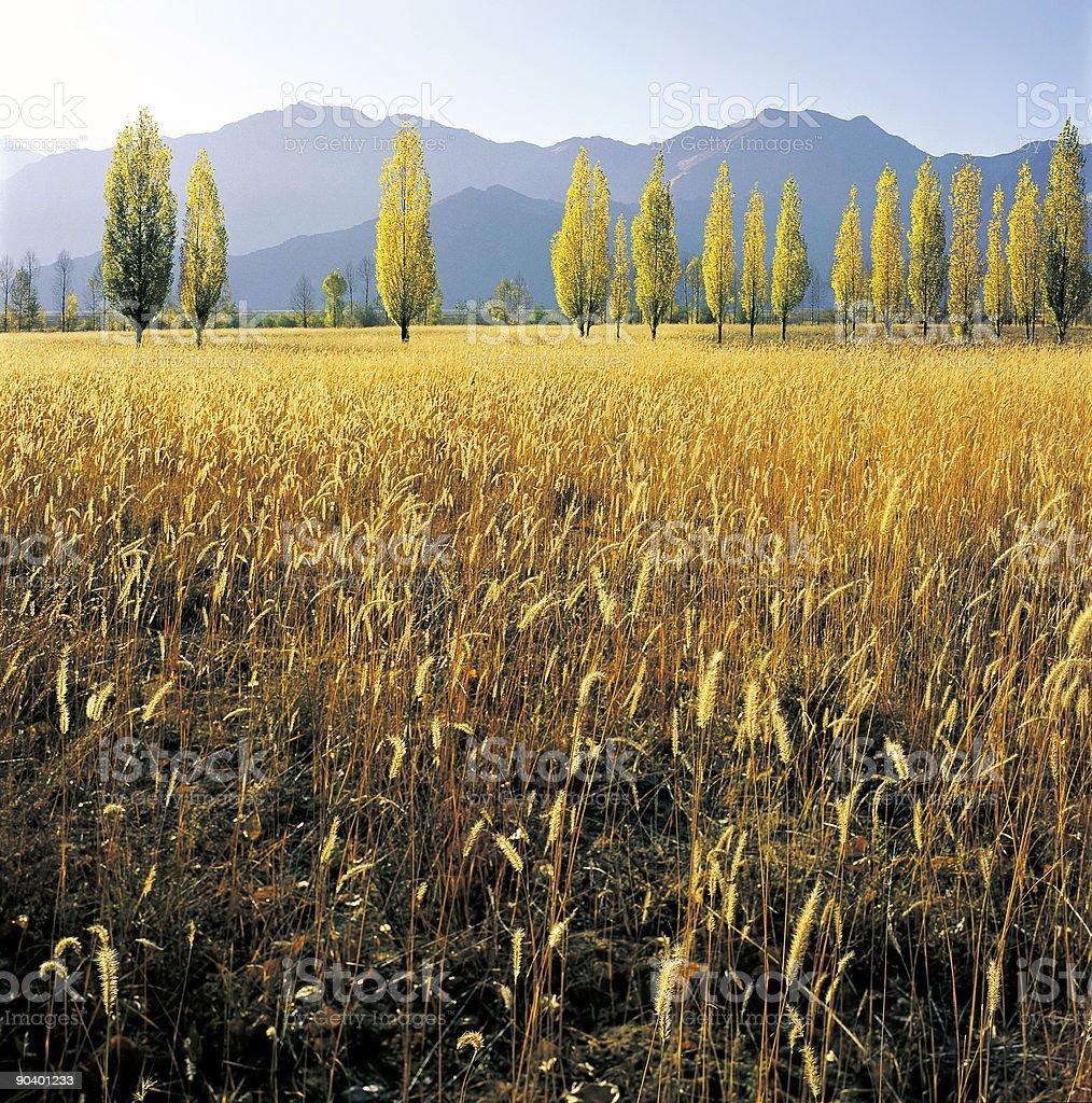 Golden fall stock photo