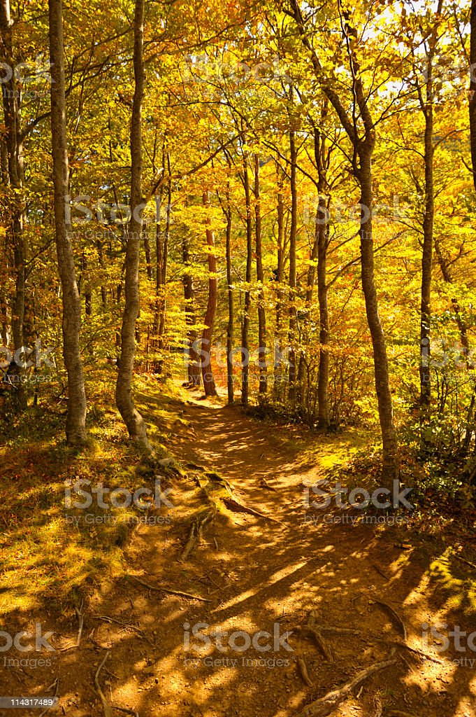 Golden Fall Scenic royalty-free stock photo