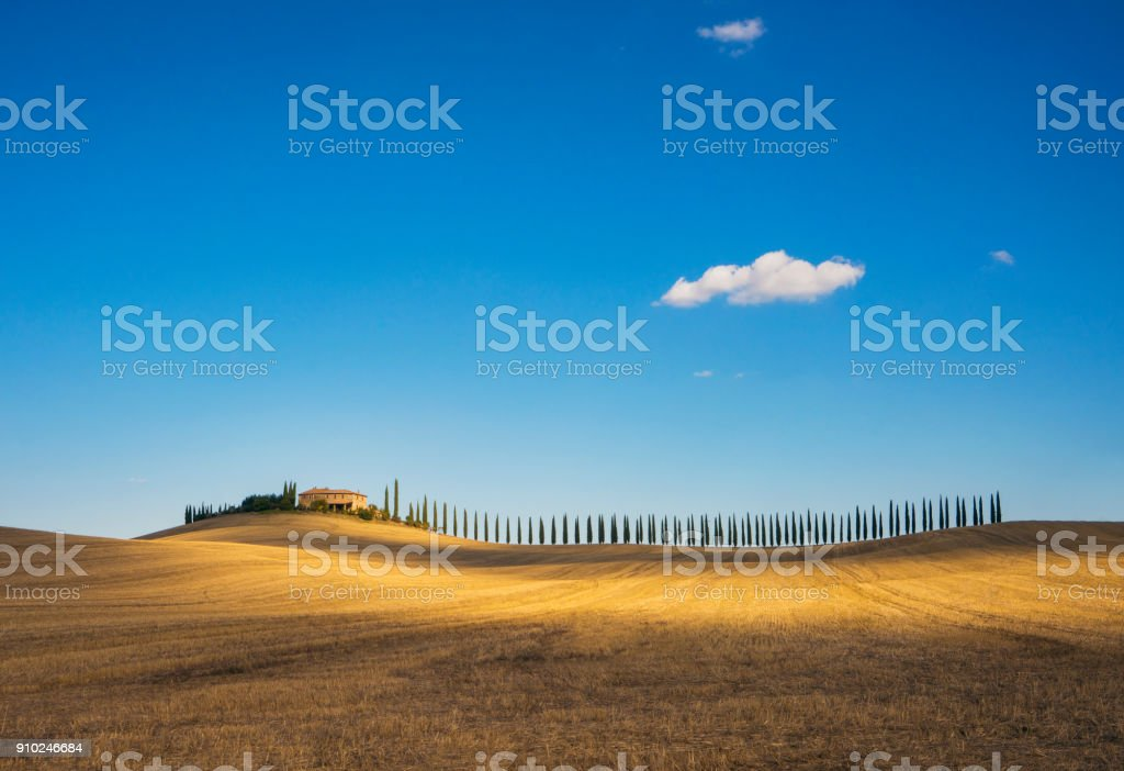 Golden field and alley of cypress in Tuscany, Italy stock photo