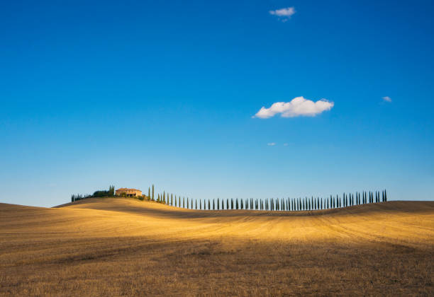 Golden field and alley of cypress in Tuscany, Italy Wide angle view of the golden field and alley of cypress in Tuscany, Italy pienza stock pictures, royalty-free photos & images