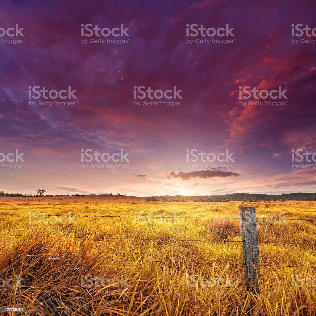 Golden field illuminated by the sunset stock photo