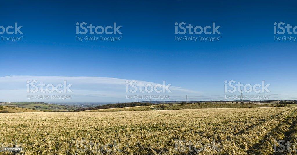 Golden fields blue sky horizon royalty-free stock photo