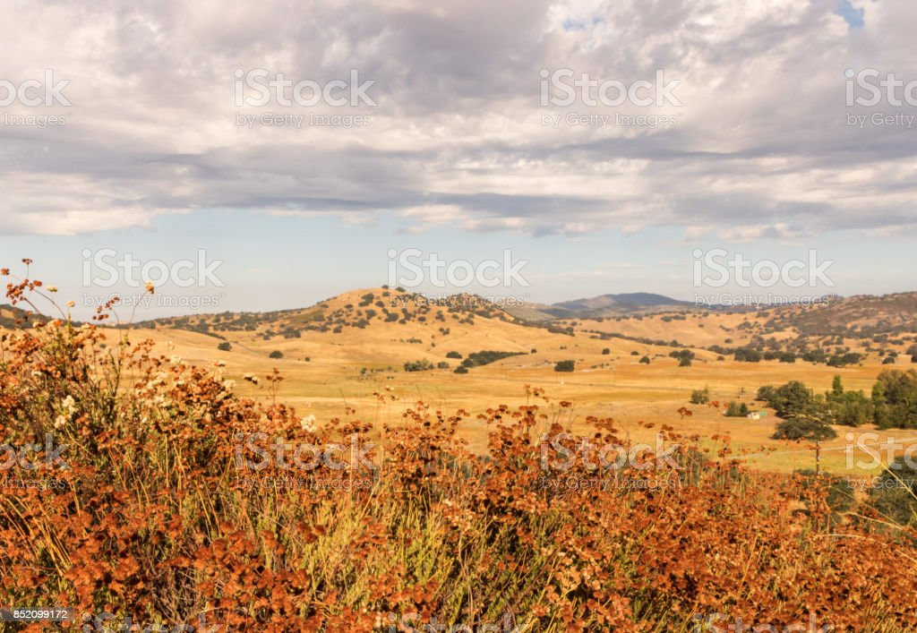 Golden fields, buckwheat, oaks, thunder rain clouds - foto stock