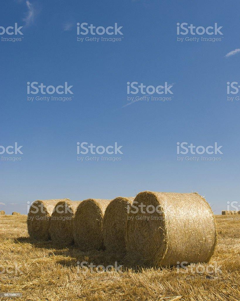 Golden fields royalty-free stock photo