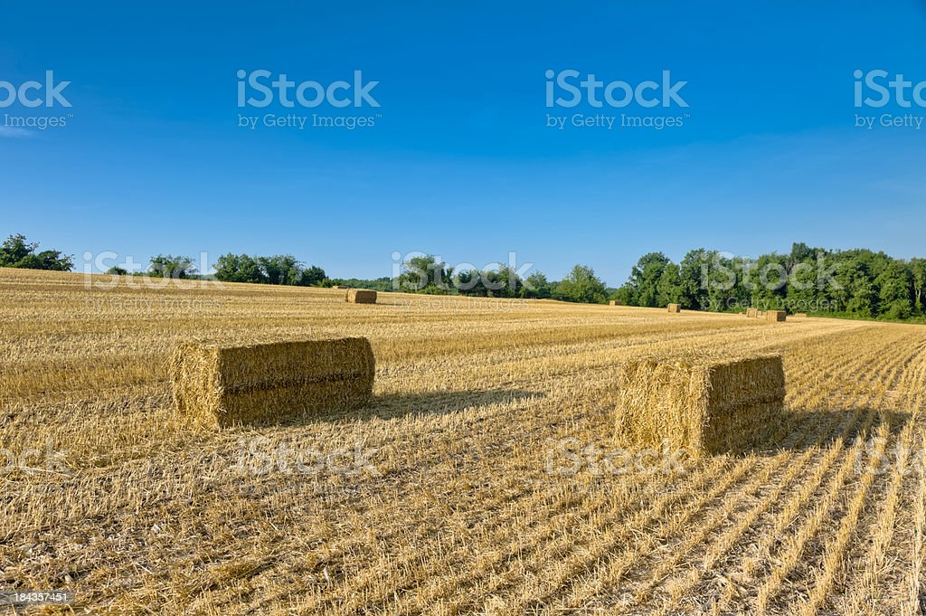 Golden Fields with Rectangular Hay Bales Under Blue Sky stock photo