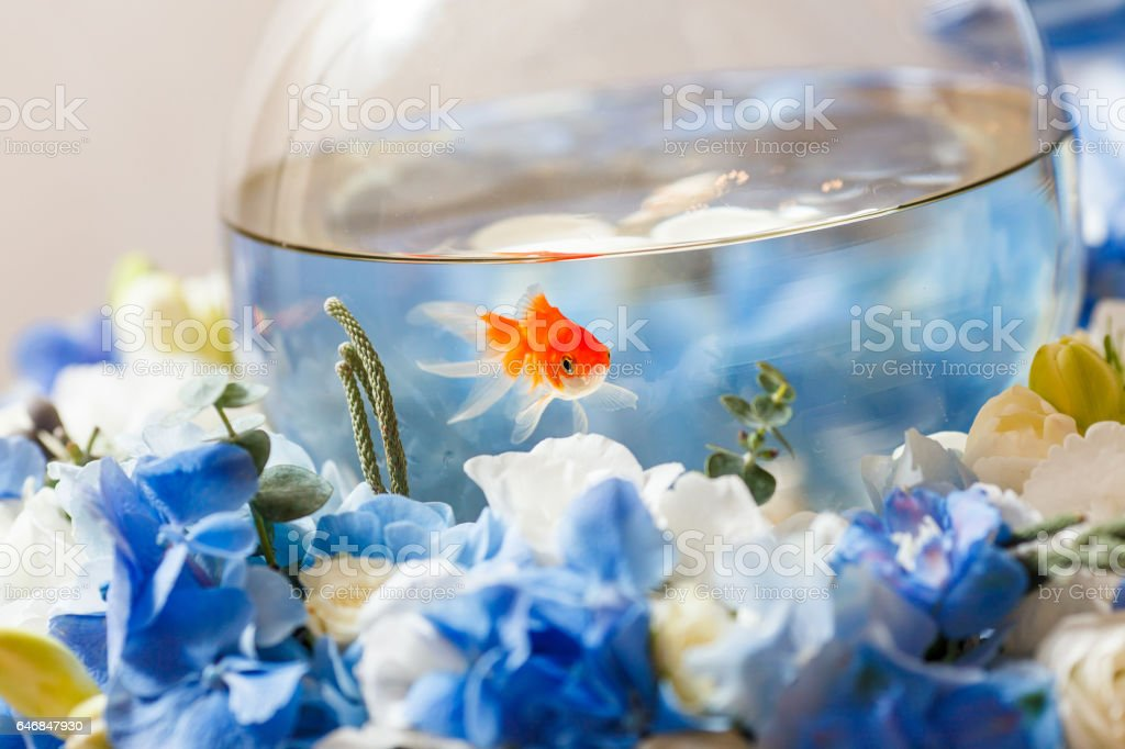 golden fish decoration stock photo