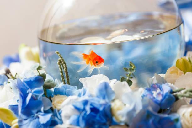 golden fish decoration stock photo
