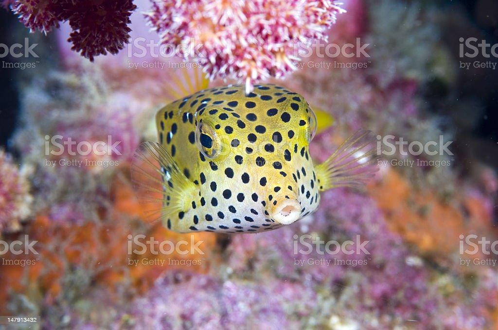 Golden fish stock photo